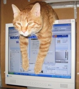 cat-computer-2