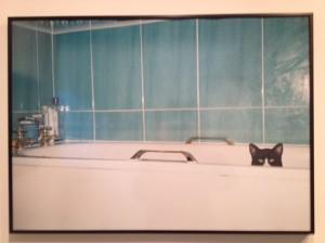 Tom-Beard-lily-silverton-cat-in-bath-630x472